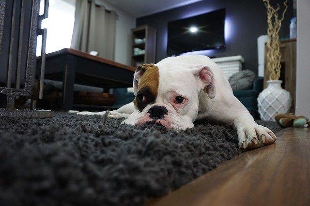 מחיר לניקוי שטיחים